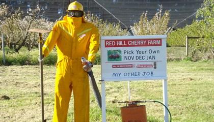 Scarecrows 2011